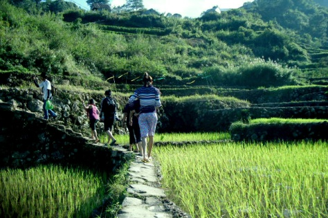 sagada-rice-terraces1